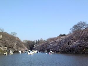 井の頭公園2011/04/05