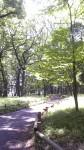 井の頭公園雑木林2011/06/06