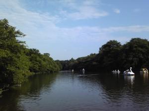 井の頭公園七井橋