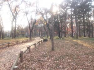 井の頭公園小径