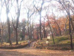 井の頭公園の雑木林