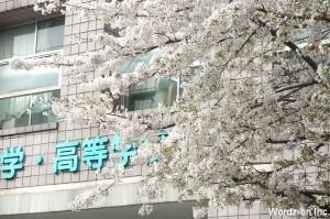 藤村女子中学・高等学校前の桜
