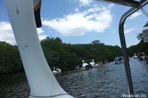 井の頭池のスワンボート