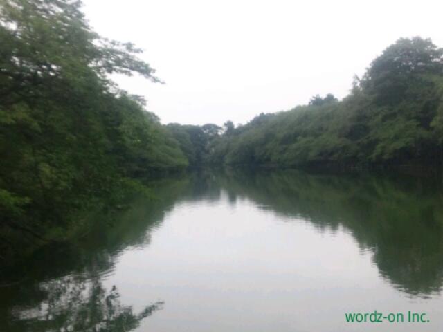 2015年7月の井の頭池